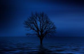 tree-738816_1920.jpg