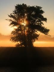 tree-76893_1920