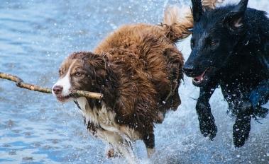 dogs-1246588_1920.jpg