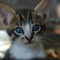 cat-1924681_1920 (2)