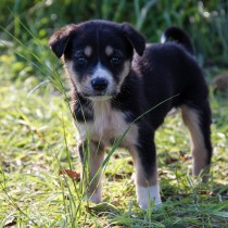 dog-1876064_1920 (2)