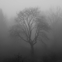 tree-1031814_1920-1.jpg
